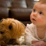 יומני הנסיך – כך ניטרל תינוק בן שנה את הטרור בבית